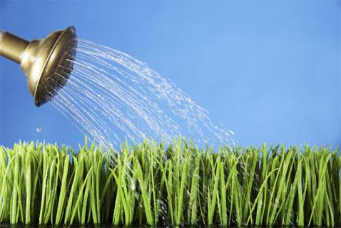 Help my yard is drowning goldsealnews for Waterside plants